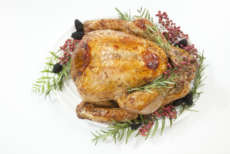 Thanksgiving Turkey on White royalty free stock image