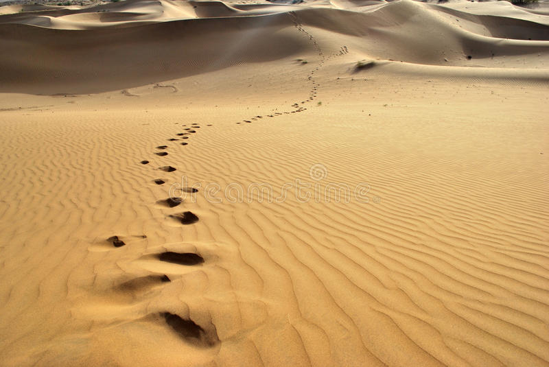 Thar desert-footprints royalty free stock photo