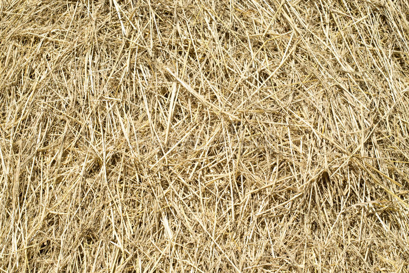 Thatch background. The thatch background on sunny day stock photo