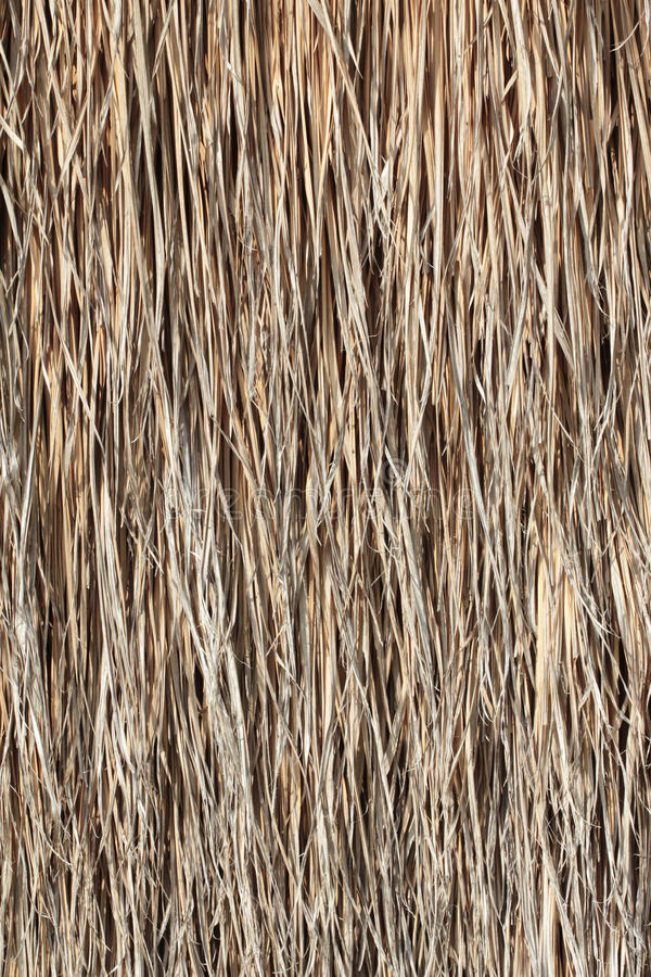 Thatch background. The Thatch of background texture stock photos