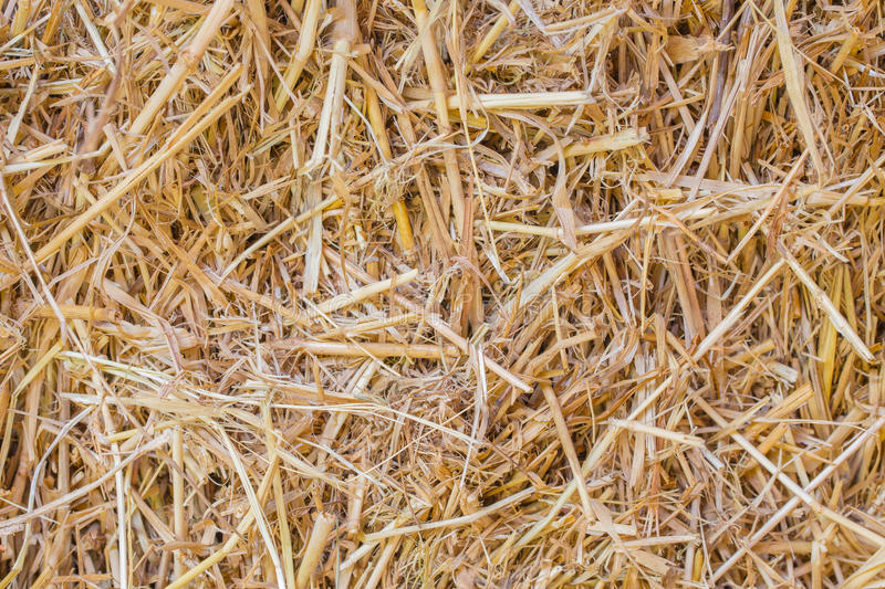 THATCH or dried rice plant rural farmer. Concept for background stock images