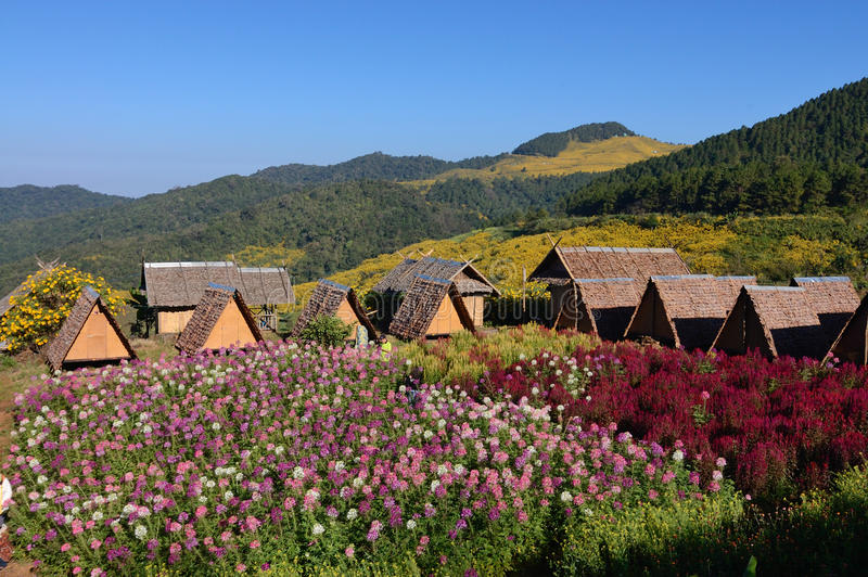 Thatch Huts and Flowers field. Simple bamboo and thatch huts in hills in northern Thailand and Flowers field. Bbackground mountain and field of Wild Mexican royalty free stock photography