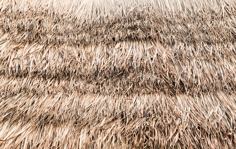 Thatch roof background. Thatch roof or dry grass background stock photography