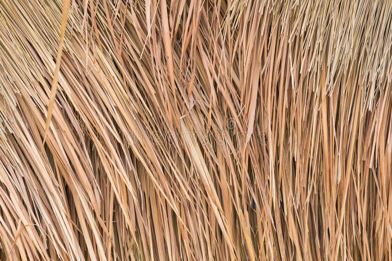 Thatch roof background, hay or dry grass background.  royalty free stock photography