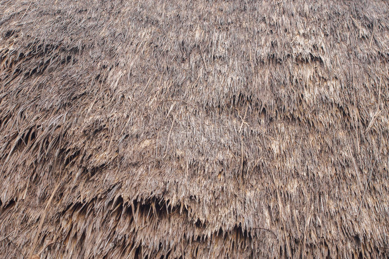 Thatch roof background. Thatch roof texture and background royalty free stock photo