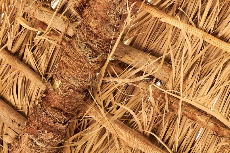Thatch roof for background. Dried straw or cane stock photography