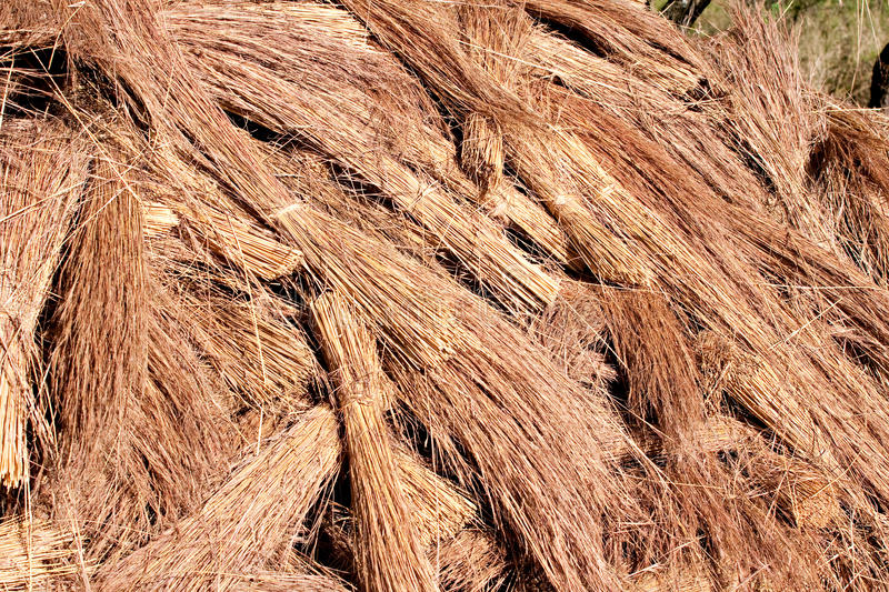 Thatch roof grass. Bundles grass used for thatch roof stock image