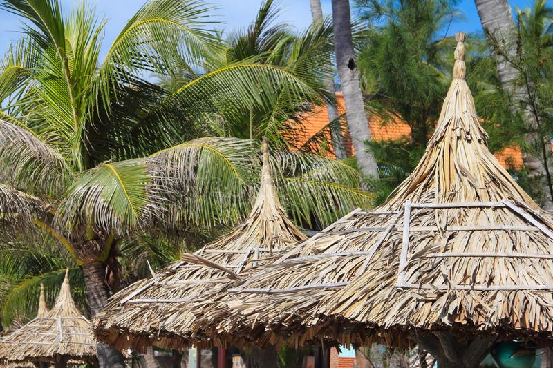 Thatch roof and palm trees. Over blue sky background tourist resort concept stock photography