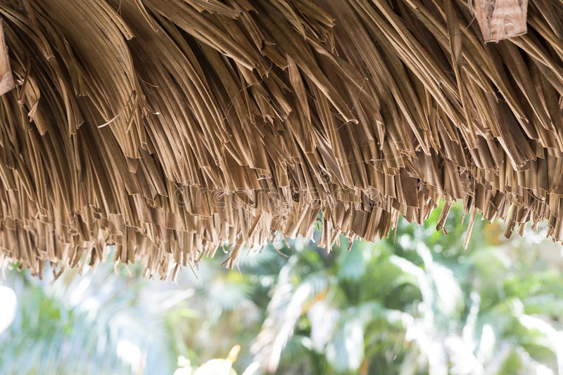 Download Thatched hut stock image. Image of roof, cuba, tree, wood - 40948375