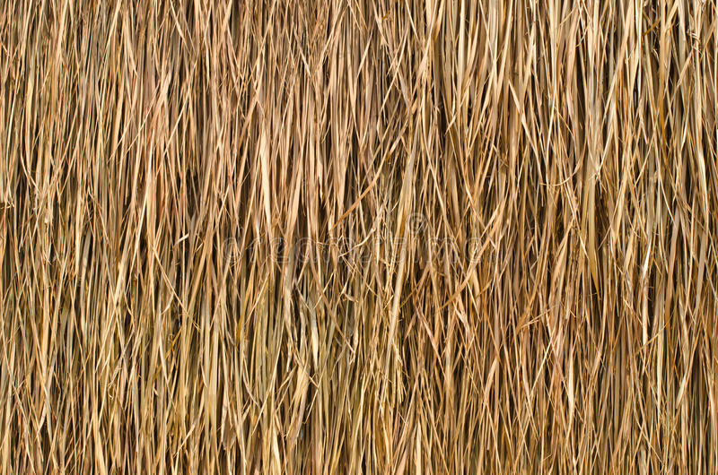 Thatched roof. Thatched roof of a cottage in the country royalty free stock photos