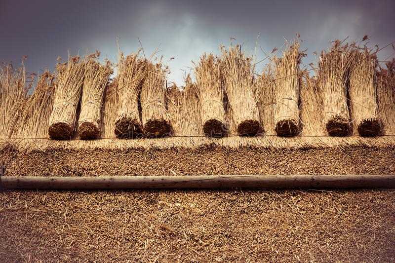 Thatched Roof with Straw and bundle reed. Thatched roof of a house with new straw. Vintage editing royalty free stock photos