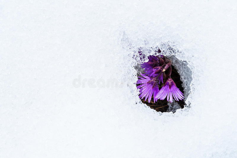 Download Thawed patch stock photo. Image of object, sprout, single - 32113902