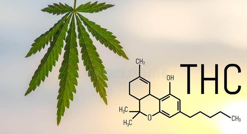 THC Tetrahydrocannabinol formula psychoactive cannabis buds marijuana royalty free stock photos
