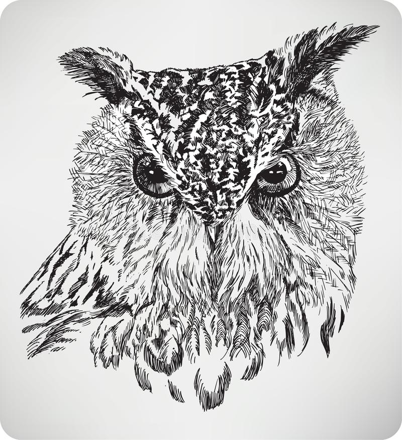 Free The Bird`s Head Eagle Owl, Hand Drawing, Vector Illustration Stock Photography - 150727252