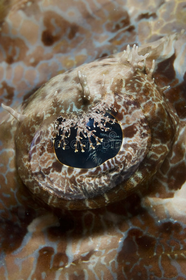 Free The Eye Of A Crocodile Fish Royalty Free Stock Images - 8721519