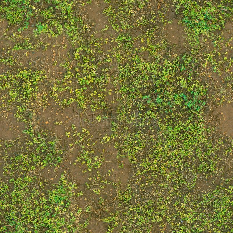 Free The Ground Is Covered With Green Weeds .Texture Or Background Stock Photos - 156201793