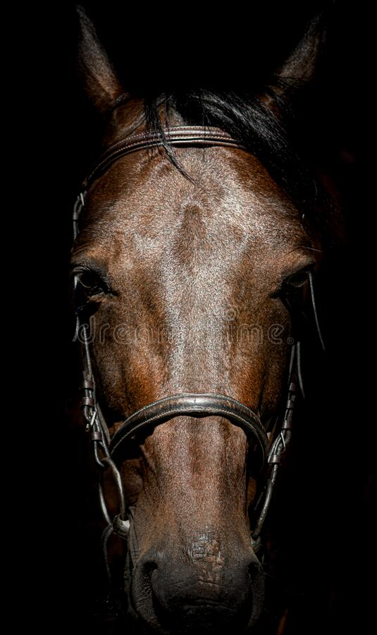 Free The Horse`s Head Is Full Face Close-up. Stock Images - 191439504