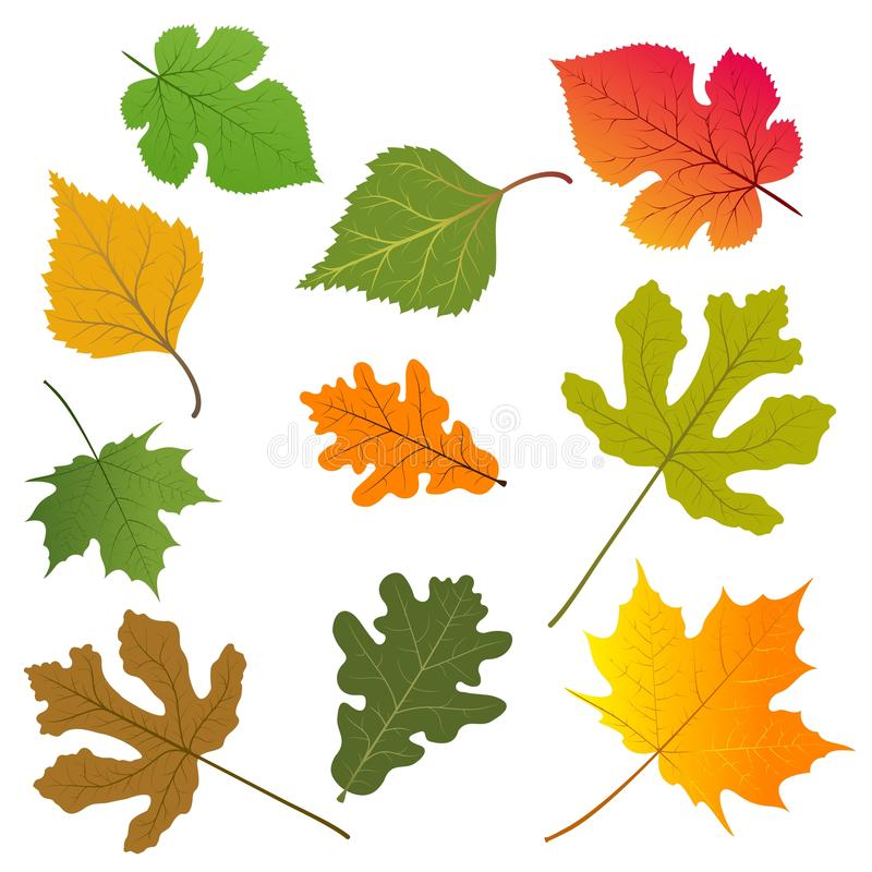 Free The Leaves Of Trees Royalty Free Stock Image - 21793486
