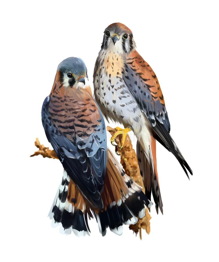 Free The Little Bird American Kestrel Royalty Free Stock Photo - 104433575
