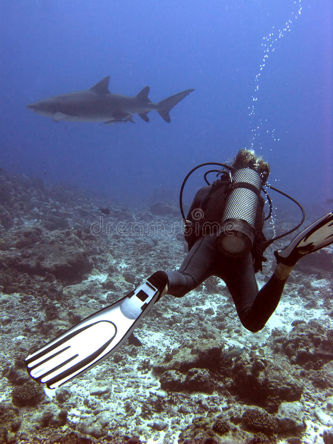 Free The Man And The Shark Stock Photo - 9702930