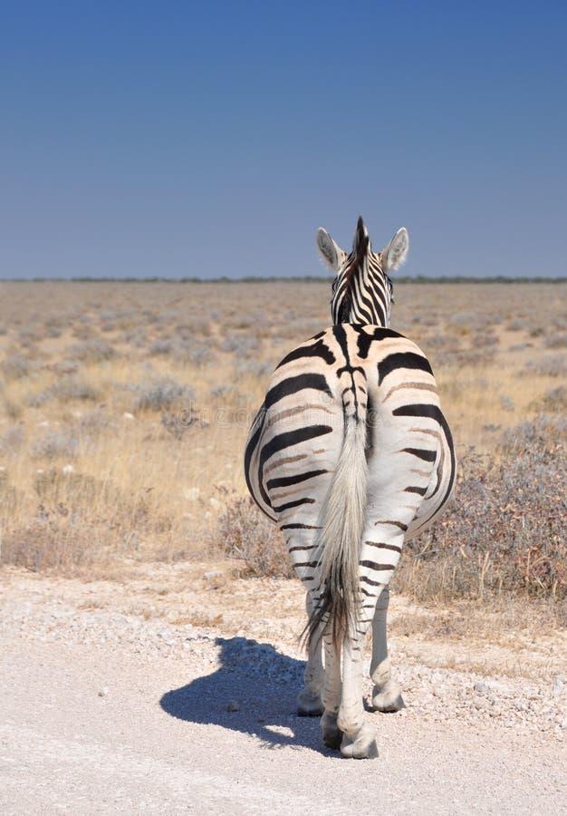 Free The Nonchalant Zebra Stock Photography - 15021362