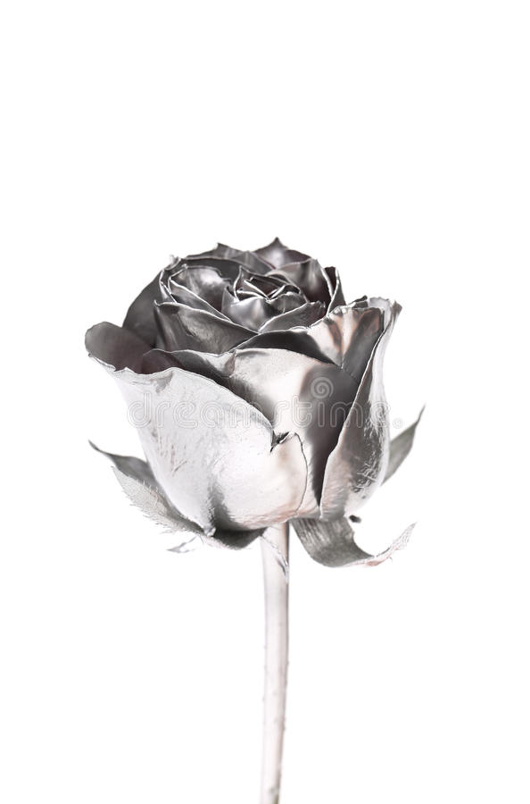 Free The Photo Of Beautiful Silver Rose Royalty Free Stock Images - 33925439