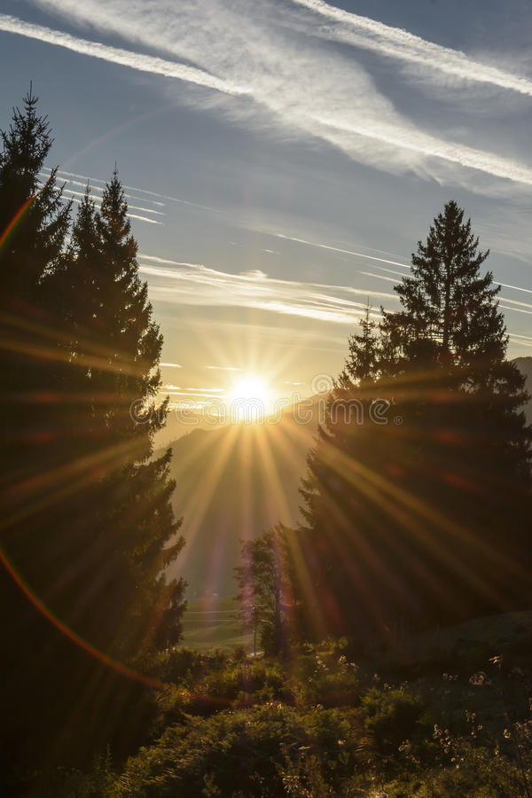 Free The Rising Sun Between Two Pine Stock Photography - 45273002