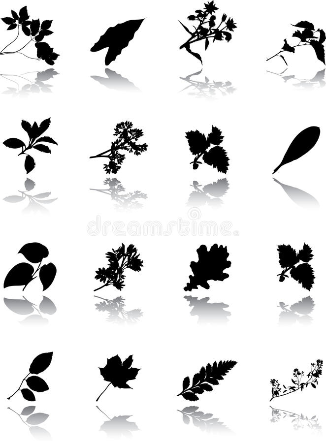 Free The Set Of Leaves Stock Photo - 11766230