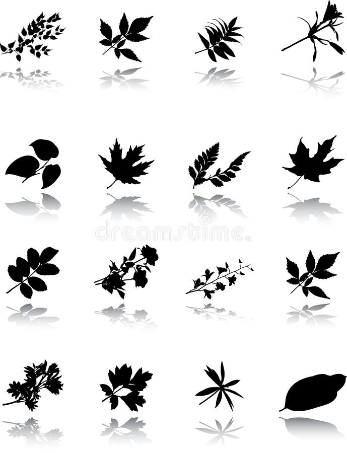Free The Set Of Leaves Stock Photos - 11766253