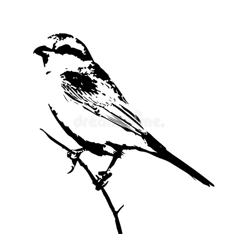 Free The Silhouette Vector Illustration Of Shrike Bird Sitting On Stick In White Background Royalty Free Stock Images - 182708449