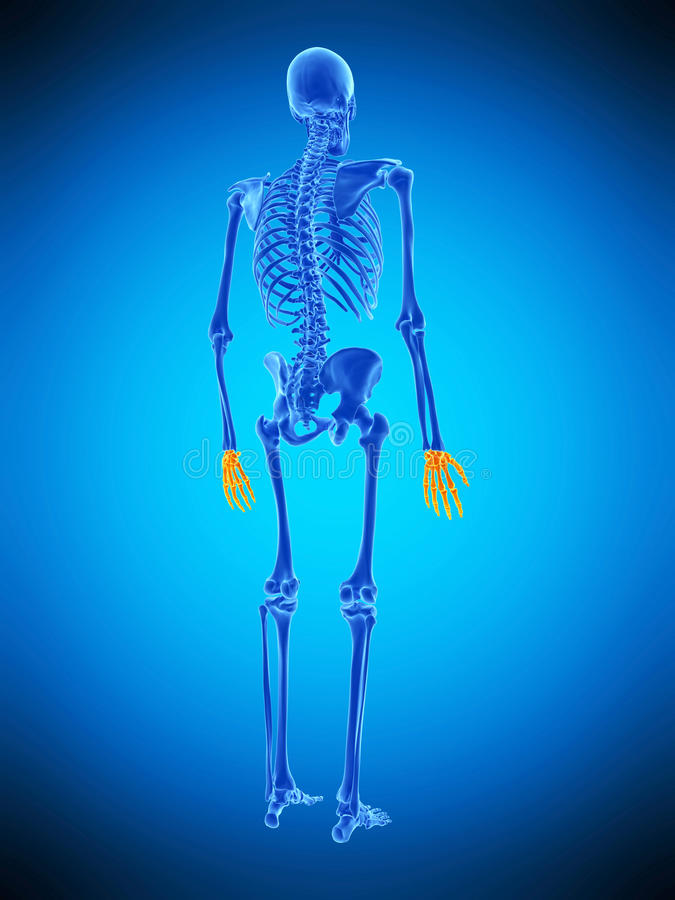 Free The Skeletal Hands Stock Image - 73213141