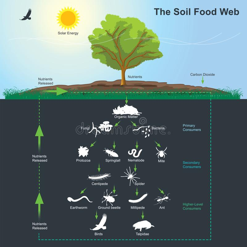 Free The Soil Food Web Diagram. Illustration Info Graphic. Royalty Free Stock Image - 111587766