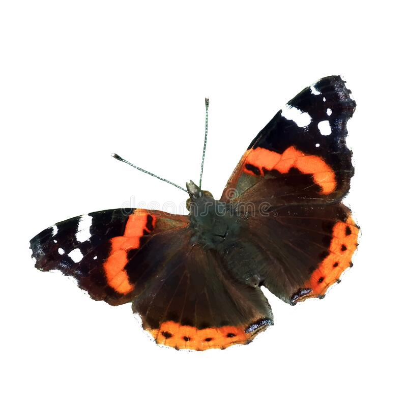Free The Vector Illustration Of Vanessa Atalanta Butterfly Isolated In White Royalty Free Stock Image - 196331586