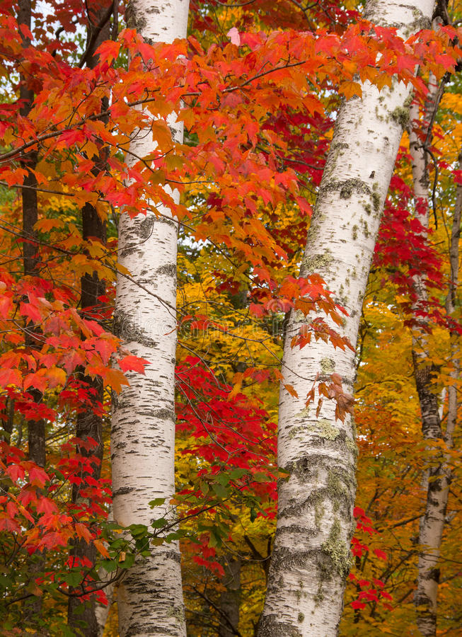 Free The Vibrant Colors Of Fall Royalty Free Stock Image - 46965756