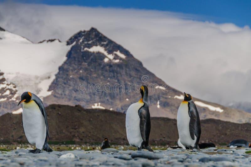 Thee企鹅国王走在线的 免版税库存照片