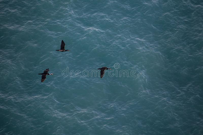 Thee black seagulls flying with sea water on background. With texture stock photo