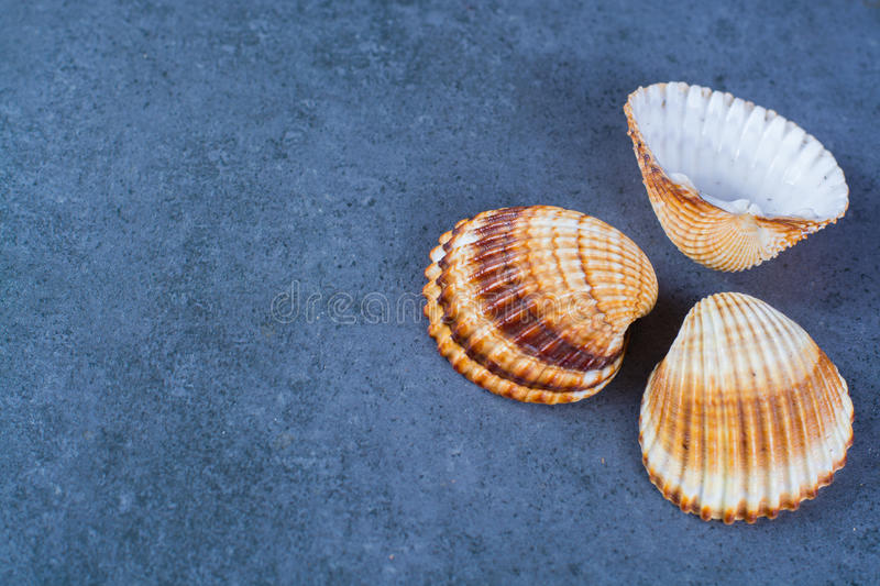 Thee colorful sea round shells, copy space. Thee colorful sea shells, copy space, on blue background stock images