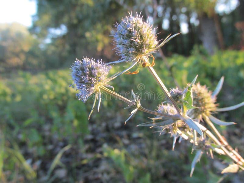 Thee kwiat jak sammer marzy fotografia royalty free