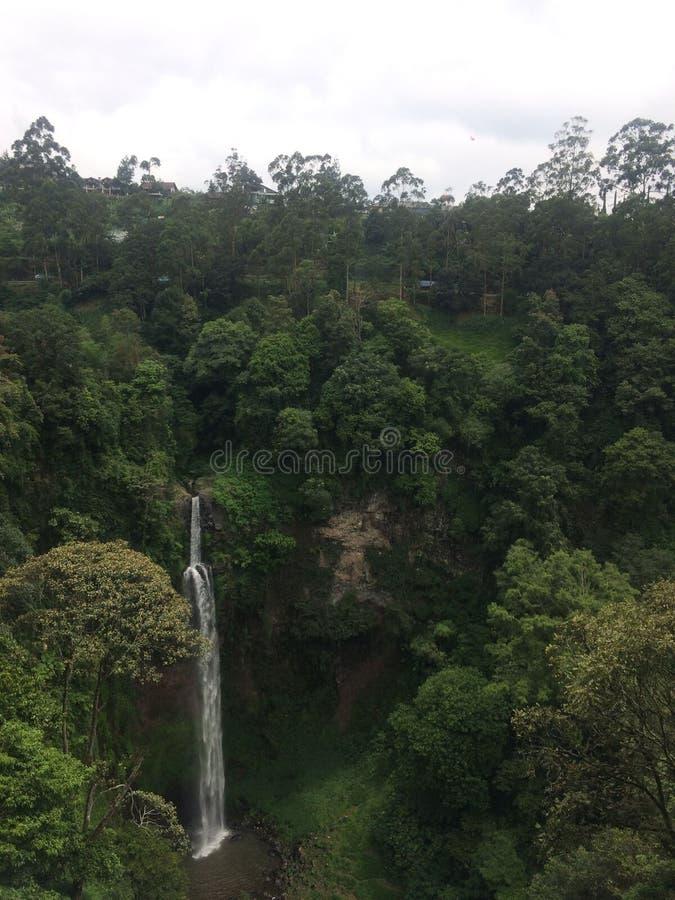 Theeaanplanting in Bandung, Indonesië royalty-vrije stock fotografie