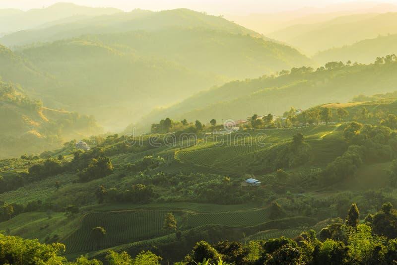 Theeaanplantingen in Chiang Rai Thailand royalty-vrije stock foto's