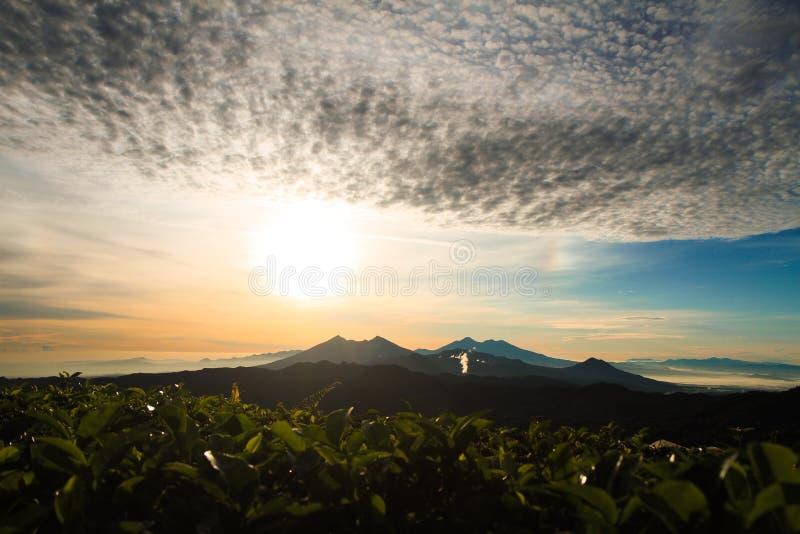 Theeaanplantingen in Malasari, Bogor, Indonesië Zonsopgangscène met Silhouetberg en blauwe hemel stock foto