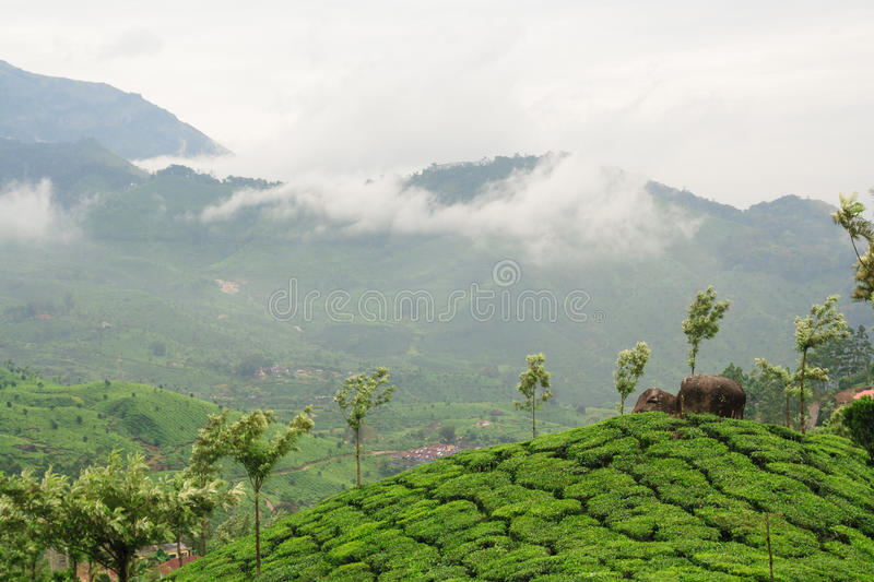 Theeaanplantingen in munnar India royalty-vrije stock foto's