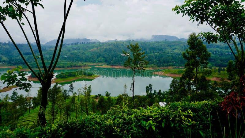 Theeaanplantingen op de regenachtige dag in Sri Lanka, Ella stock afbeeldingen
