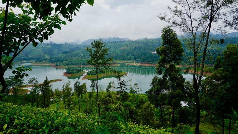 Theeaanplantingen op de regenachtige dag in Sri Lanka, Ella royalty-vrije stock foto