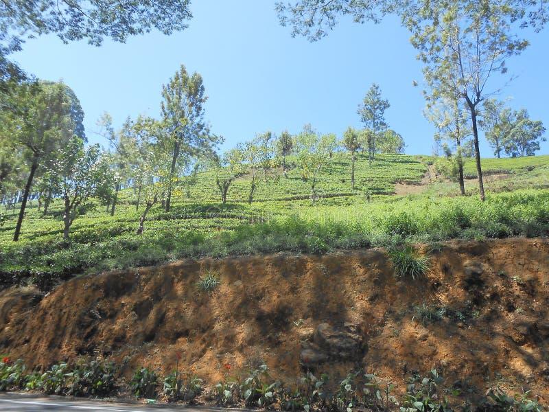 Theelandgoed in Sri Lanka stock foto's