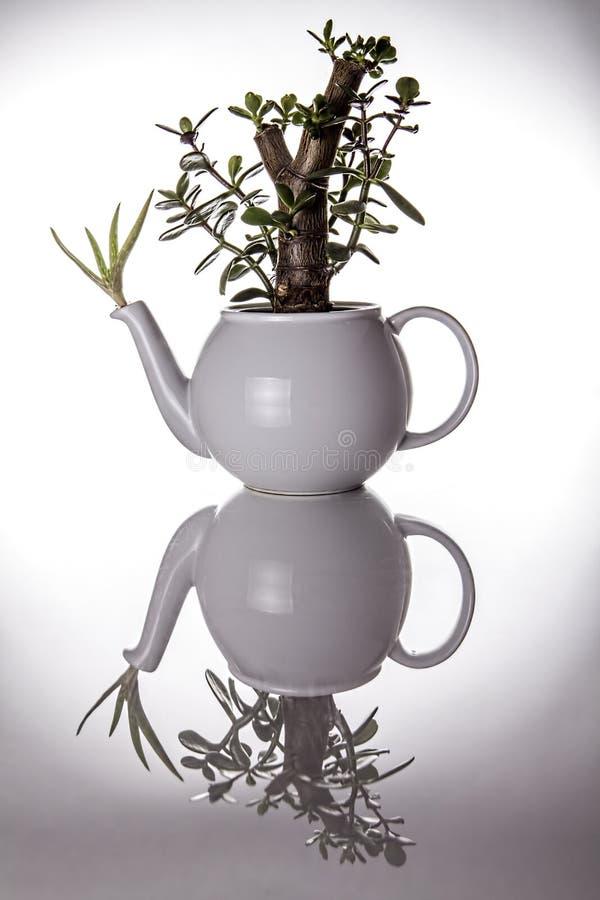 Theepot als ongebruikelijke sierplantpot die wordt gebruikt stock fotografie