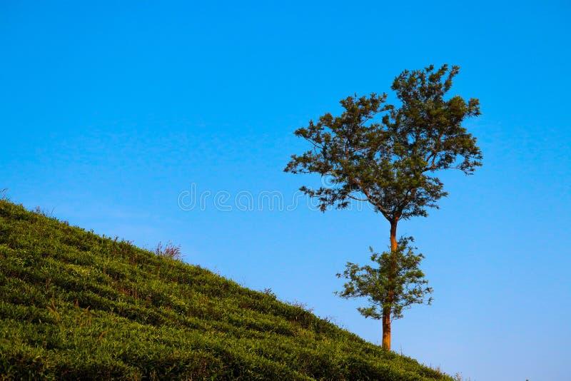 Theetuin die blauwe hemel kussen royalty-vrije stock afbeeldingen