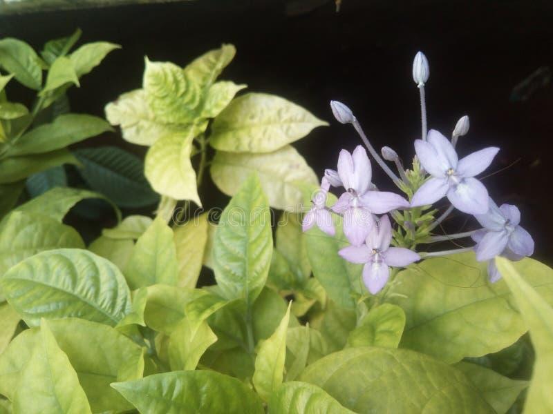 Theflower de fleur photos libres de droits