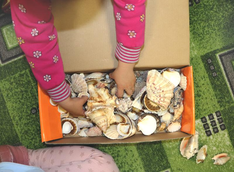 Thematic occupation in the kindergarten on the theme of the sea. Sea shells and shellfish in a close-up box. Sea shells and shellfish in a close-up box. Thematic royalty free stock photo