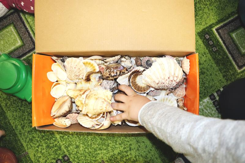 Thematic occupation in the kindergarten on the theme of the sea. Sea shells and shellfish in a close-up box. Sea shells and shellfish in a close-up box. Thematic royalty free stock image